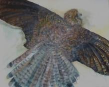Falke, Öl/L