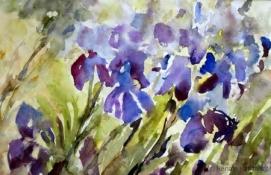 Iris, Aquarell