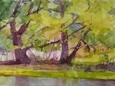 Bäume, Aquarell